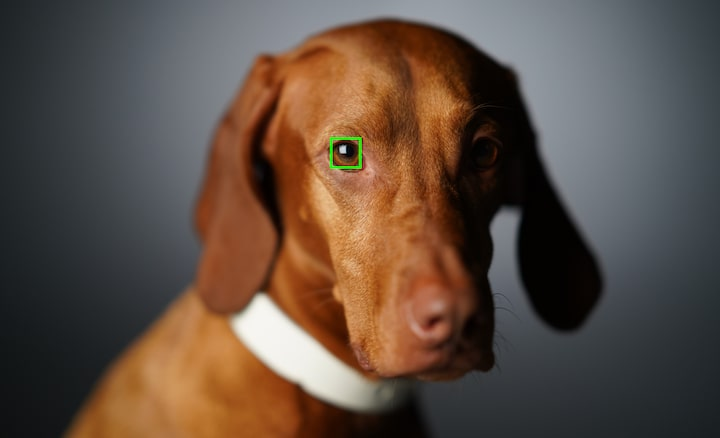 Real-time Eye AF with animal eye tracking for more success