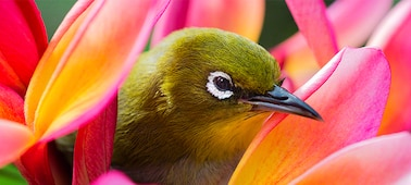 Image of bird showing 4K picture detail