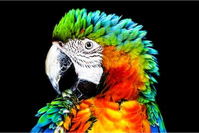 Detail of parrot on Sony OLED with Pixel Contrast Booster