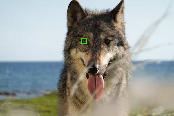 Real-time Eye AF for Animals